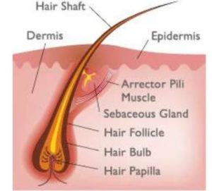 how to pass hair follicle drug test