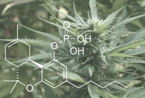 how to pass marijuana drug test